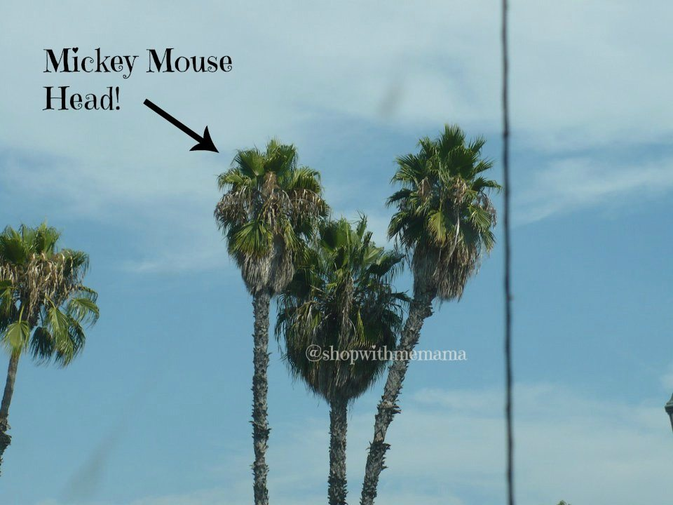 mickey mouse palm trees