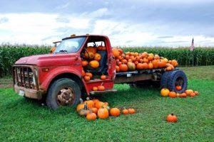 Corn Maze Coupons And Fall Festival Savings Nationwide #FallFamily