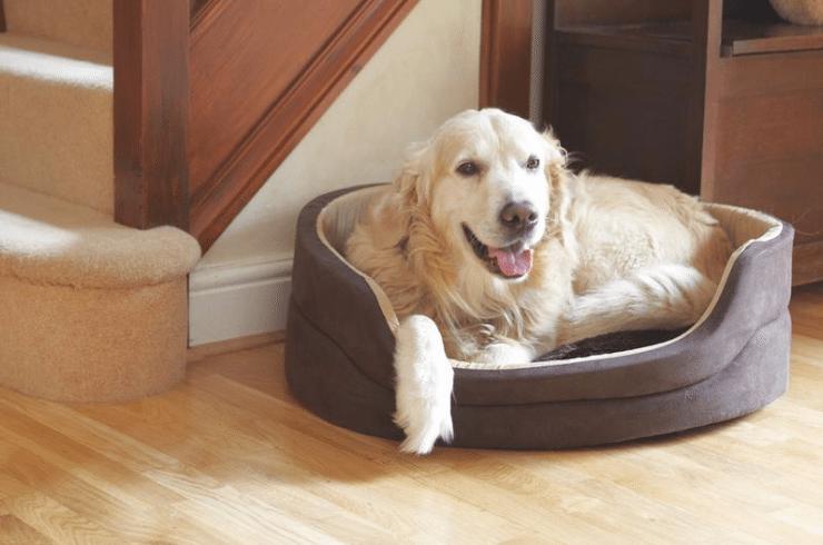 Orthopedic Beds Help Pets Live Longer