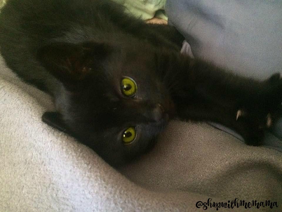 Friskies Pull 'n Play Available At PetSmart Black Kitten