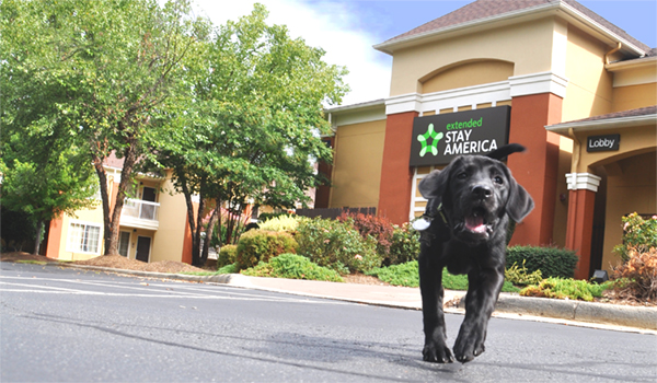 Where Can I Find A Pet-Friendly Hotel Near Me?