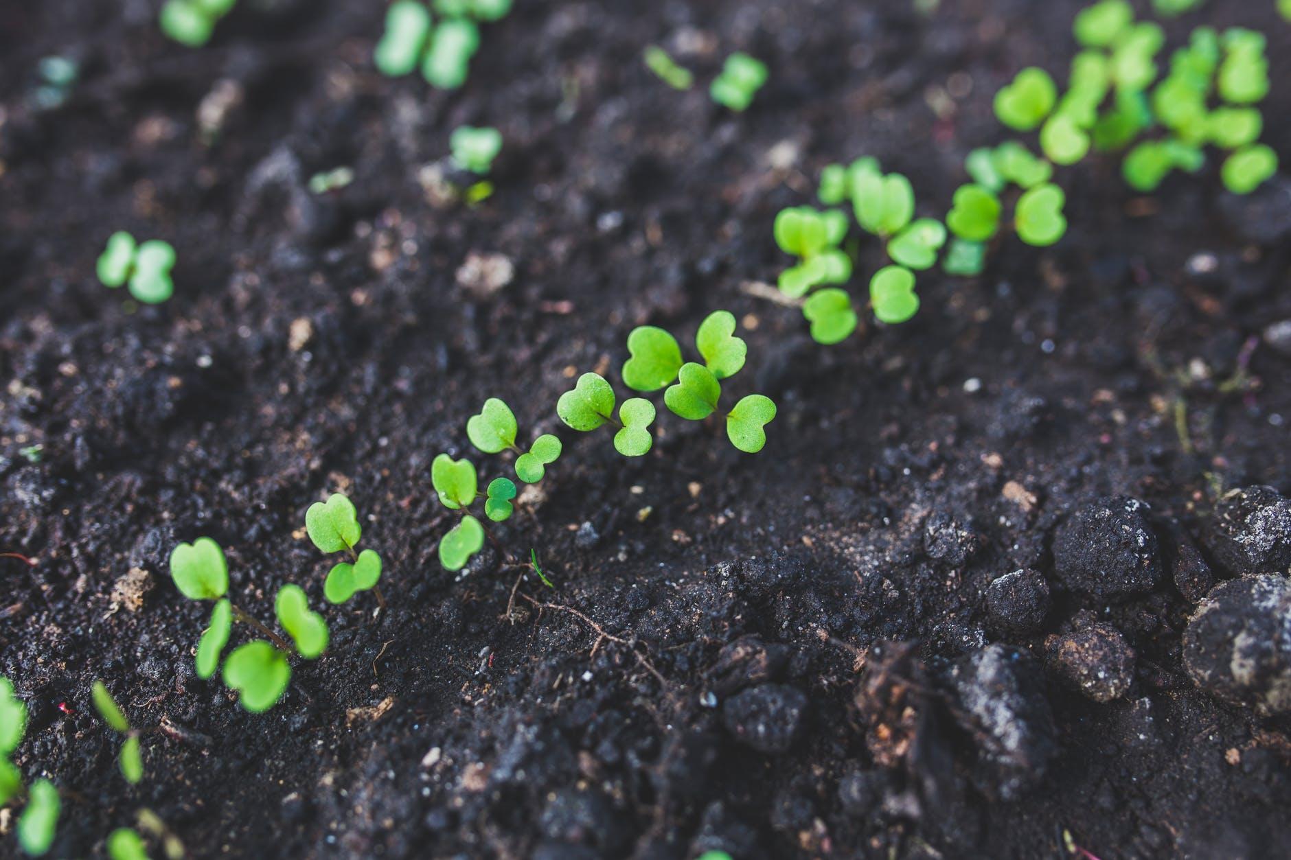 Starting Your Own Vegetable Garden