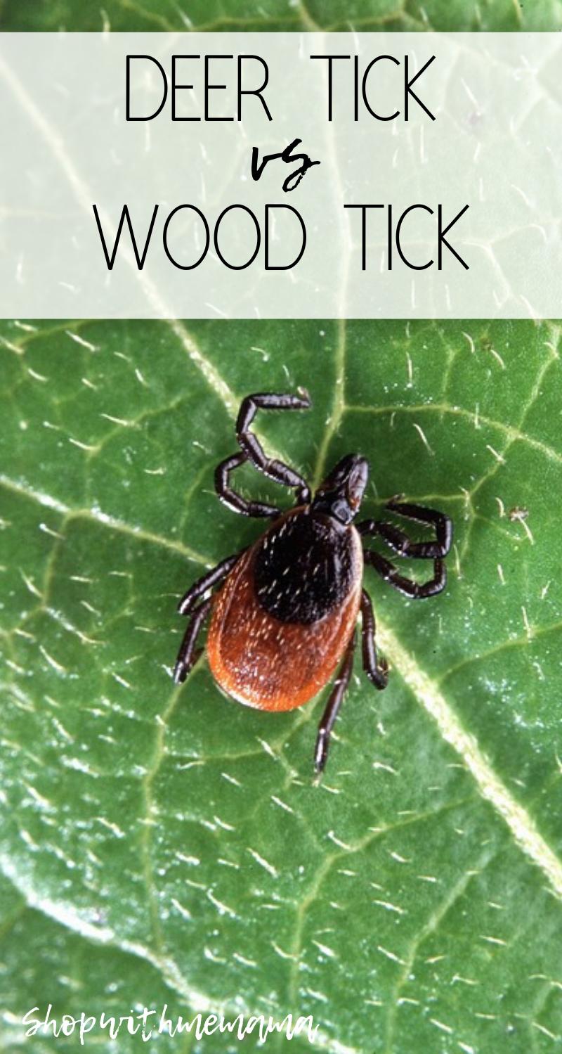 Deer Tick vs Wood Tick
