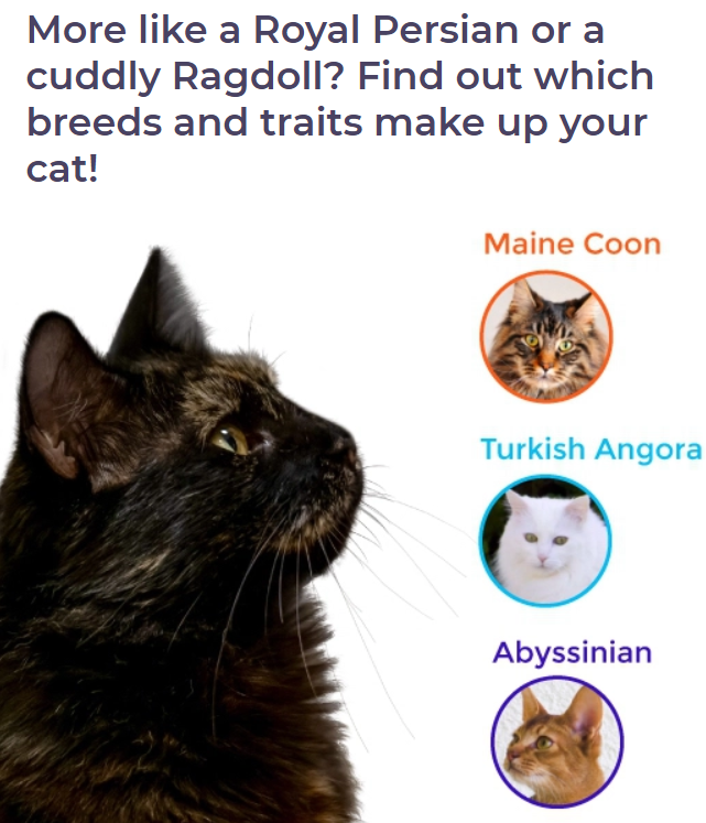 get to know your cat