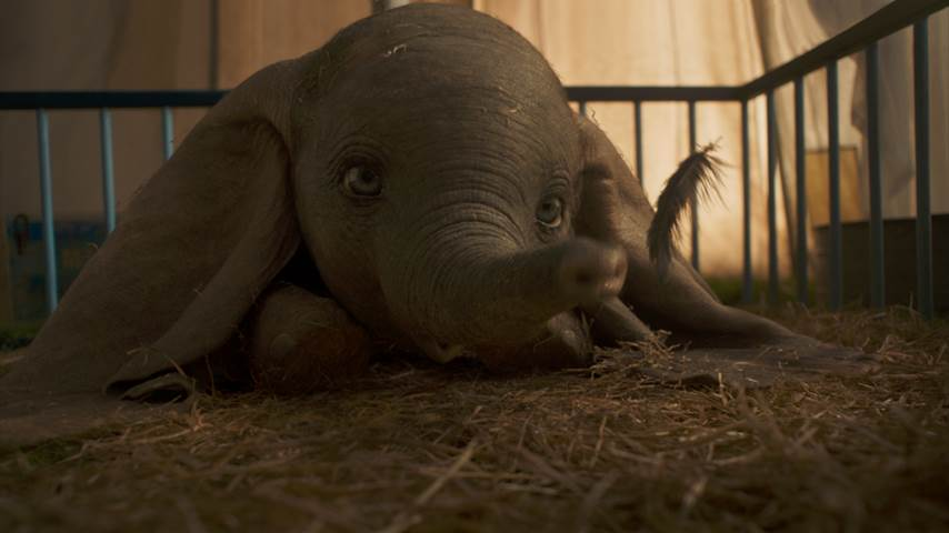 Dumbo Baby Elephant Is Here