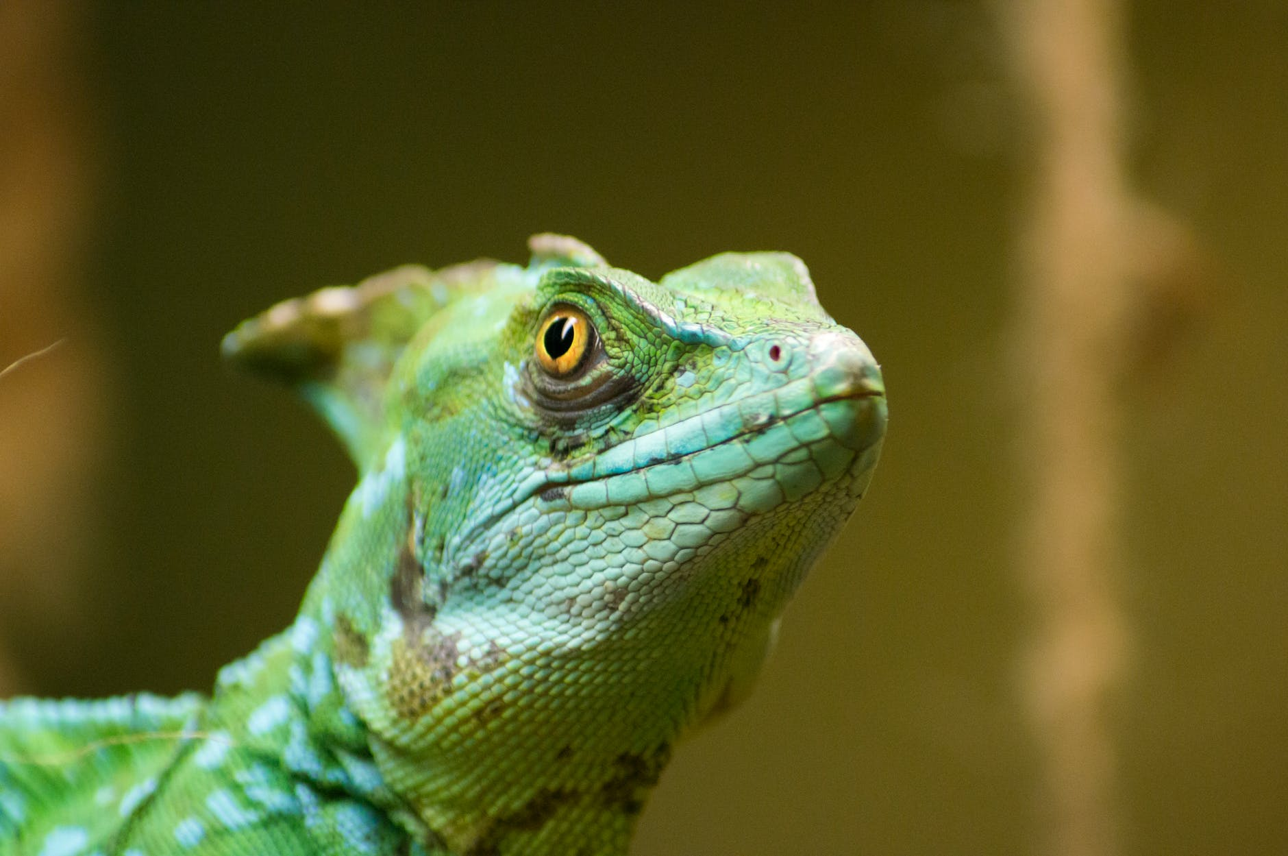How to Pick an Exotic Pet