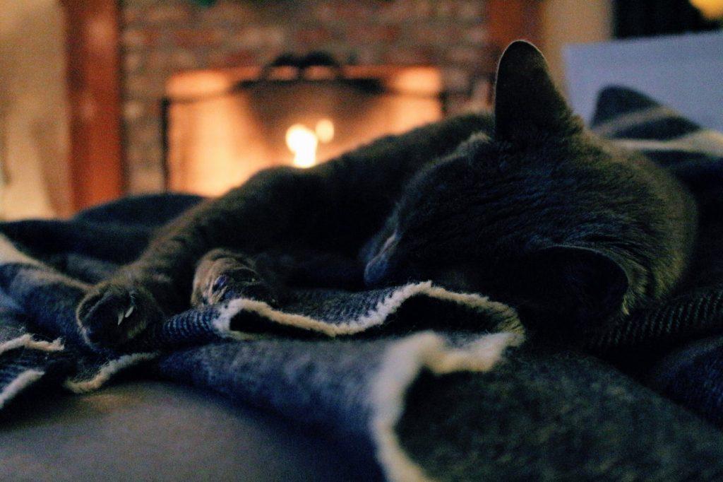 relaxing by fire kitten