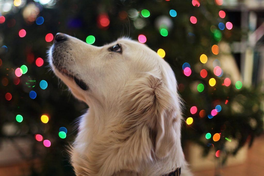 Involve Your Pet In Christmas Celebrations