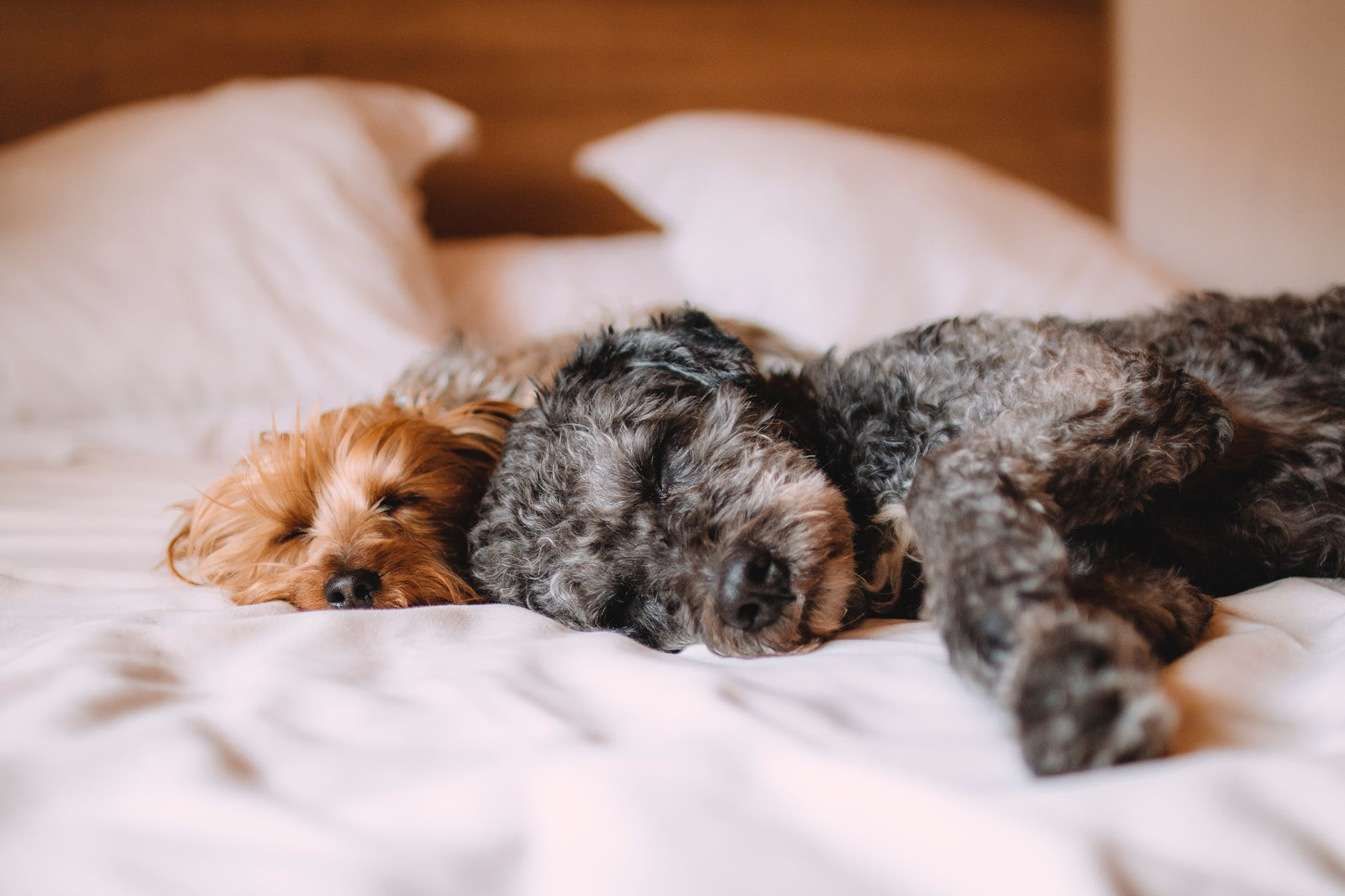 Could Pet Sitting Be For You?
