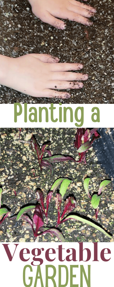 Planting a vegetable garden from scratch