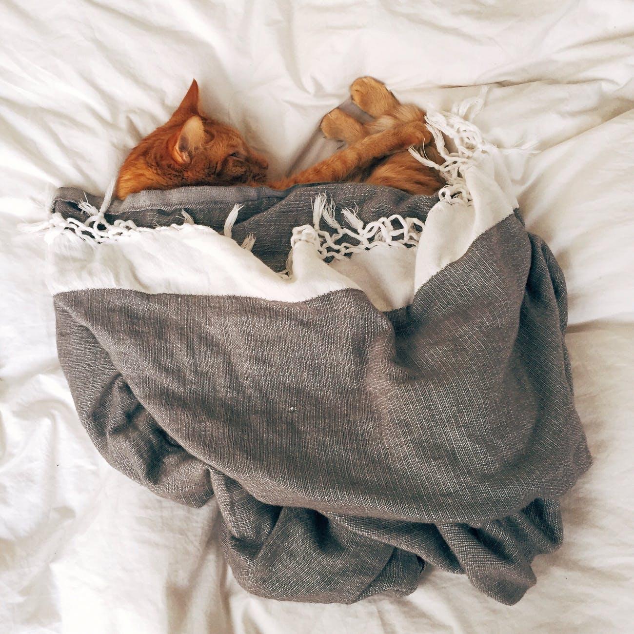 kittens in bed sleeping
