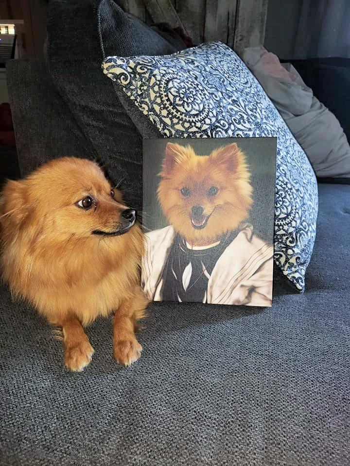 Funny Pomeranian