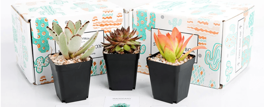 Buy Succulents Online with The Succulents Subscription Box!
