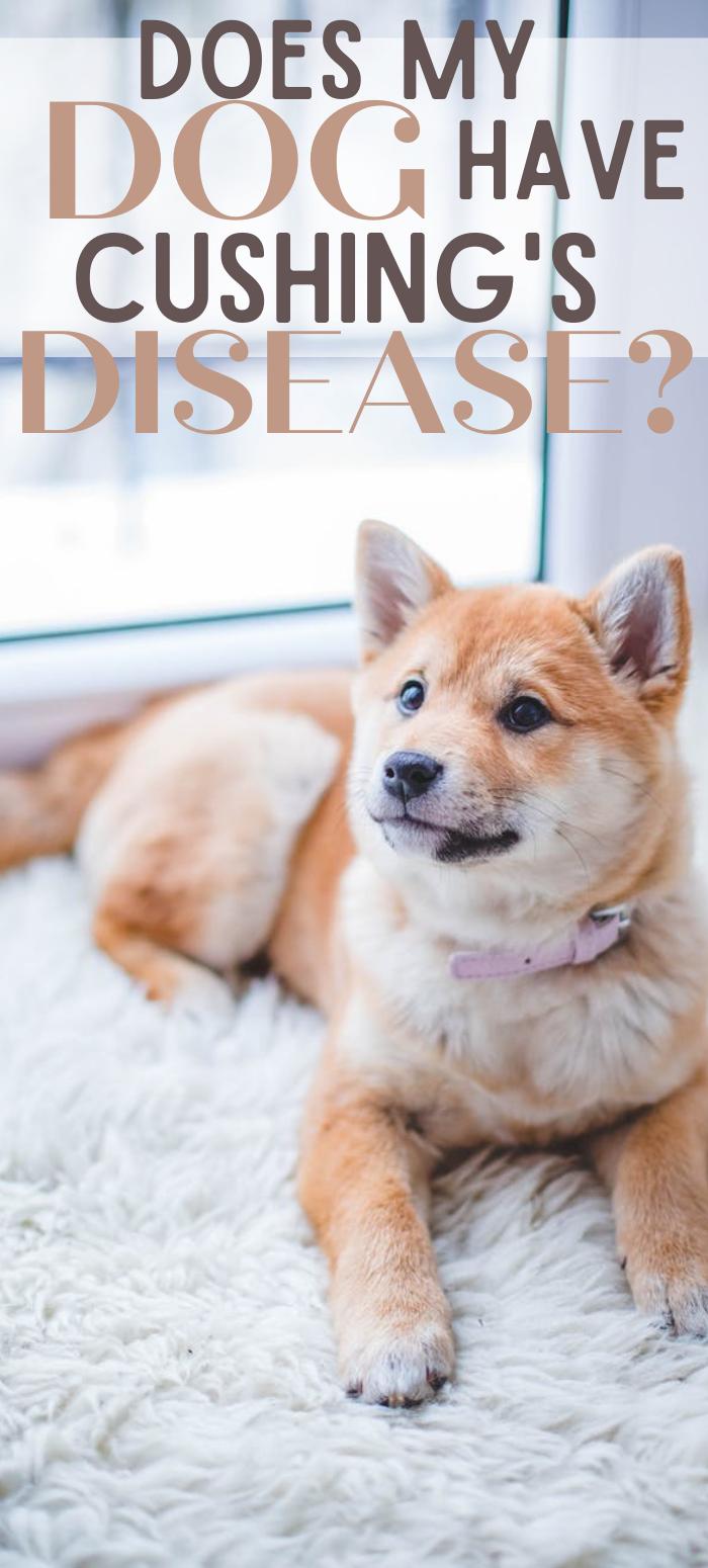 Dog Cushing's Disease