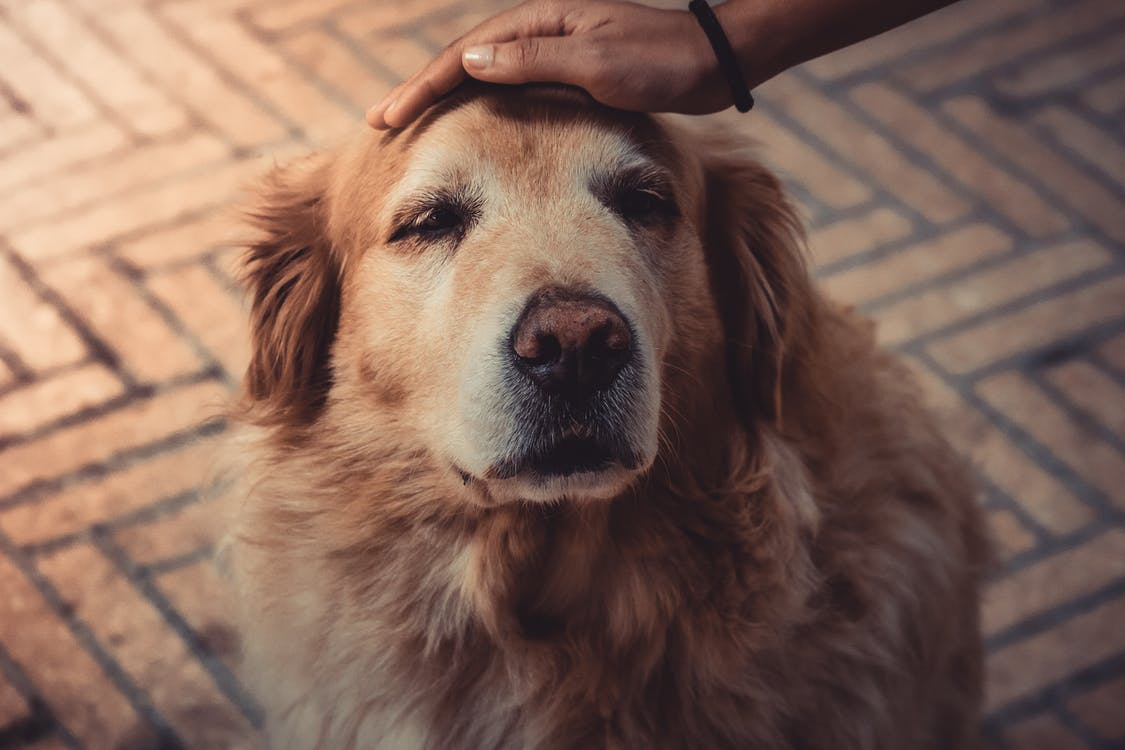 Dog Cushing's Disease: Essential Natural Remedies to Help Your Dog