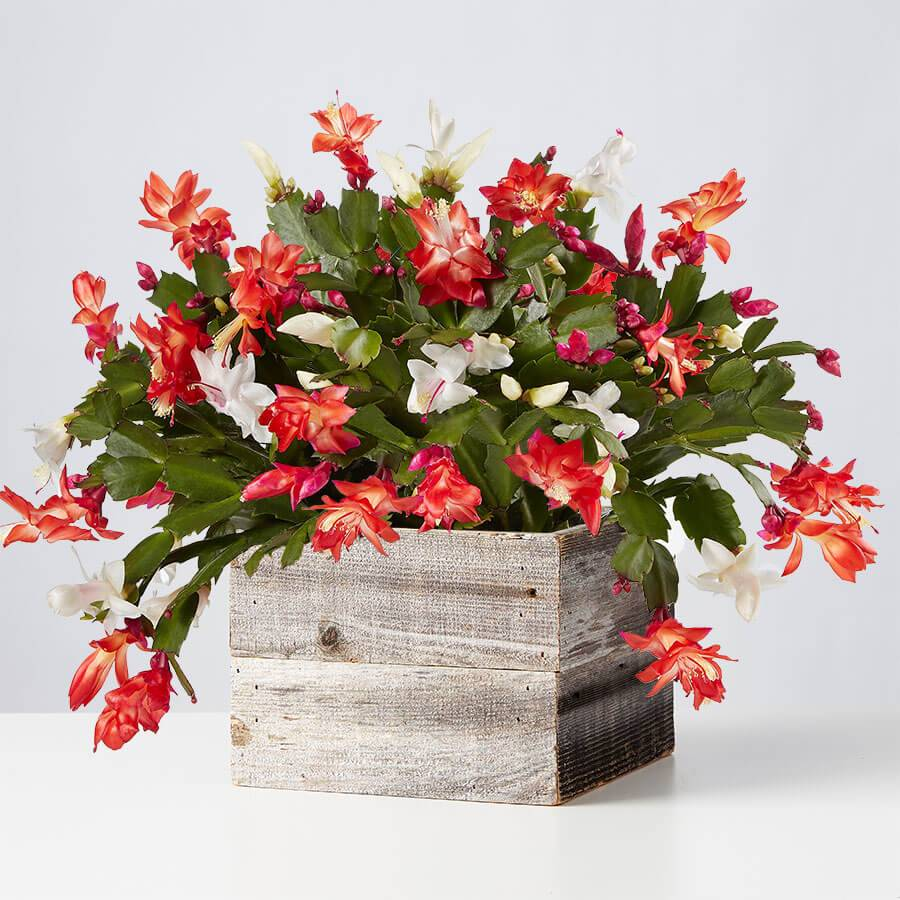Beautiful Plants By Mail