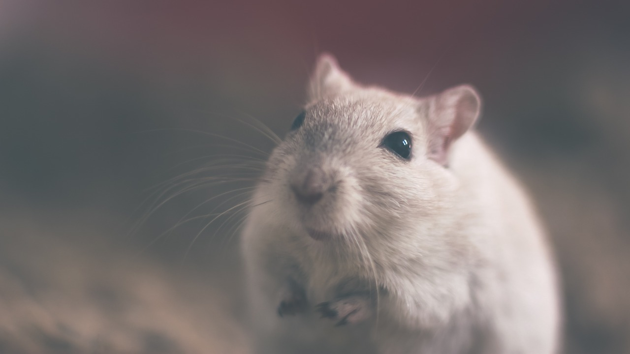 Pests To Look Out For In Your Home
